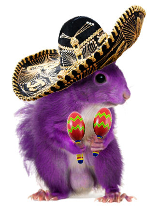 The Purple Squirrel is that dazzling candidate with the perfect background and credentials